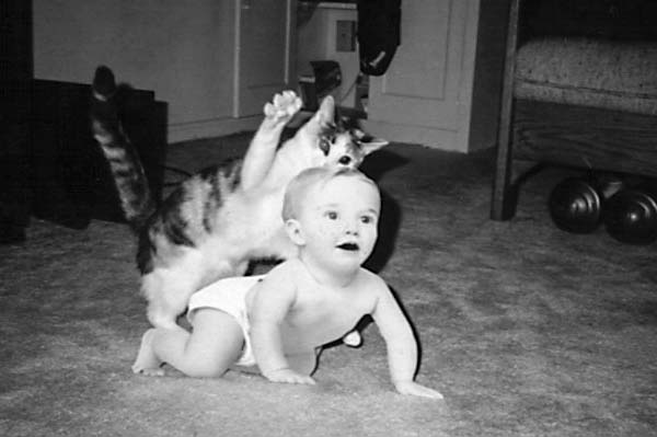 A cat attacking a realistic cardboard cutout of a baby.